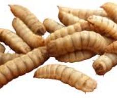 Tips for mindre larver og lukt