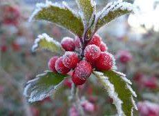 Vinteråpningstider på Trysil og Haugedalen gjenvinningsstasjon